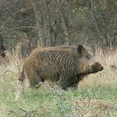 caza en la monatña asturiana en teverga
