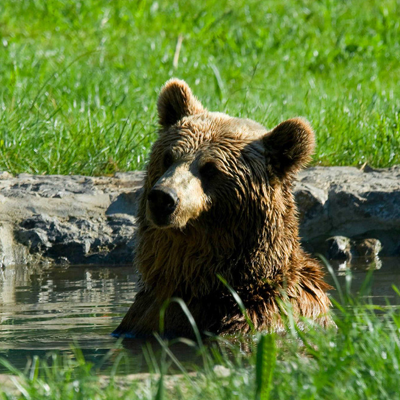 osa oseznos hotel senda del oso